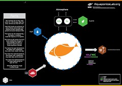 Fish in Aquaponics (AL Team) Tags: aquaponics fish sustainable infographic cycle aquaponicslaborg nutrients ph feeding temperature oxygen carbon dioxide metabolism light level