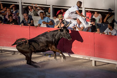 French bull pierces the trousers of the bull fighter (Phototravelography) Tags: 2017 85thanniversary arles cocarde fccmotion france provence stierkampf verletzung animal athletic blessé bovine brave bull bullfight corrida escape fear fight flee herido motion raseteur run strong toreau toro ngc lesrencontresdarles printalbumselection