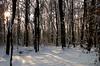 Zasnežen gozd (natalija2006) Tags: winter snow nature forest slovenia slovenija zima sneg gozd narava diamondclassphotographer flickrdiamond