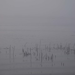 Ladner Harbour in the fog 2009