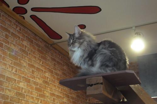 Today's Cat@20091229
