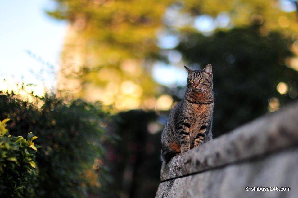 Roppongi cats
