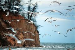 .... (anka.anka28) Tags: sea bird water seagull poland polska woda ptak klif gdynia orowo morze pomorze mewa 450d canon450d