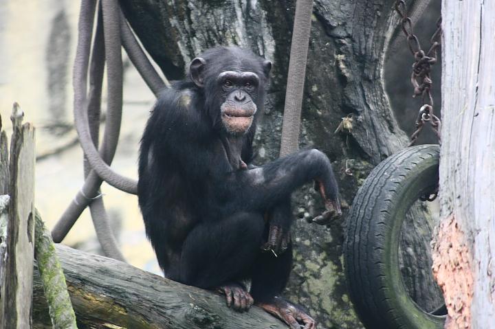 2009木柵動物園0013