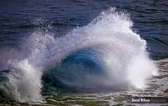 Blue Barrel (Daniel Willans) Tags: ocean sun beach water sunshine bay sand nikon surf waves barrel australia d300