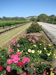 Grant Burge Winery