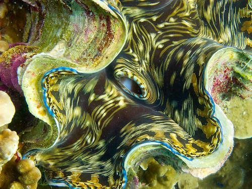 Underwater Gulf of Thailand - Japanese Gardens 03