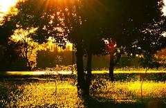 ocaso (Edison Zanatto) Tags: sunset brazil naturaleza sun sol southamerica nature brasília brasil backlight sunrise contraluz landscape atardecer soleil nikon natureza natur laranja paisaje paisagem pôrdosol 夕陽 crépuscule landschaft sonne árvore paesaggi ocaso sonneuntergang alvorada tarde contrejour controluce anochecer anoitecer coucherdesoleil crepúsculo nascente contrallum puestadelsol americadosul poente puestas fimdetarde luscofusco südamerika centrooeste nikond200 dilúculo postadelsol regiãocentrooeste crepúsculovespertino postadosol continentesulamericano edisonzanatto