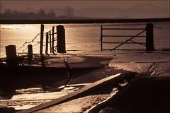 Ice Landscape in the Netherlands (Foto Martien) Tags: winter white holland film ice netherlands dutch analog nijmegen river frozen frost hoarfrost nederland slide frosty dia scan analogue rhine digitized rijn scannedslide uiterwaarden waal gelderland rivier floodplain analoog diascan minolta9000 scanedpicture martienuiterweerd martienarnhem minoltamacro100mm28 martienholland