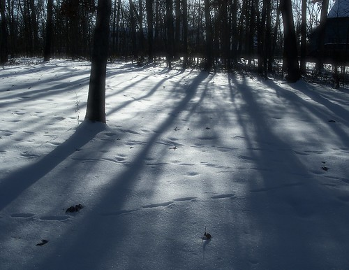 more tree shadows