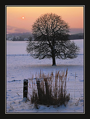 ... cold evening ... (Nord-Licht) Tags: schnee winter light snow black tree nature landscape abend licht nikon awesome natur landschaft baum abendhimmel 2010 einsam d80