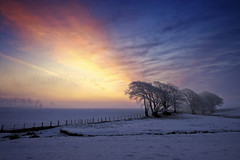 Born of frustration (Stuart Stevenson) Tags: morning winter light sky mist snow colour tree ice fog sunrise fence landscape dawn scotland early frost finally snowscape borrowedcamera clydevalley pleaseviewlarge minus8 stuartstevenson ahalfdecentpictureafterweeksoftrying mightyrelieved