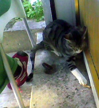 חתול ליד הרגל שלי במפגש רחל בכרם התימנים