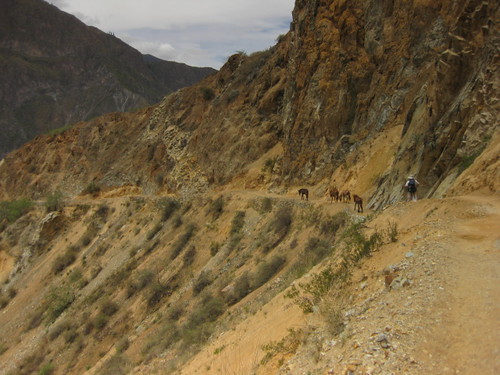 mules on the path ahead