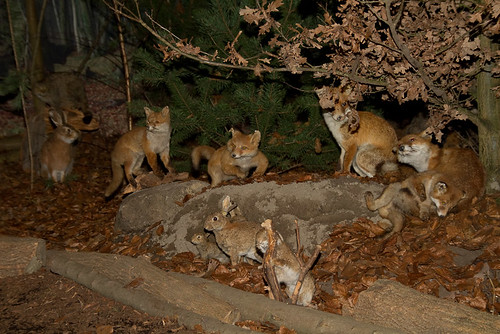 Da wo sich Fuchs und Haase gute Nacht sagen