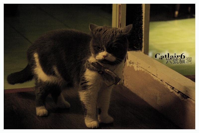 六號 貓洞  Miranda