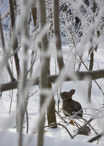 bunny seek