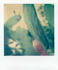 Ojai Cactus 1