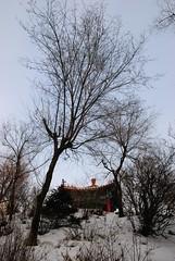 Day 1 Harbin 11 (serametin) Tags: china harbin northeastchina tamron1750mmf28 serametin