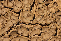 Drying mud (kasia-aus) Tags: brown abstract nature mud dry australia soil drought canberra cracked act 2010
