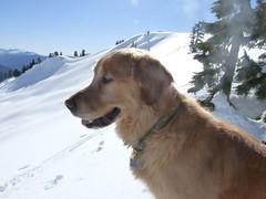 Gus guarding Lake Ann