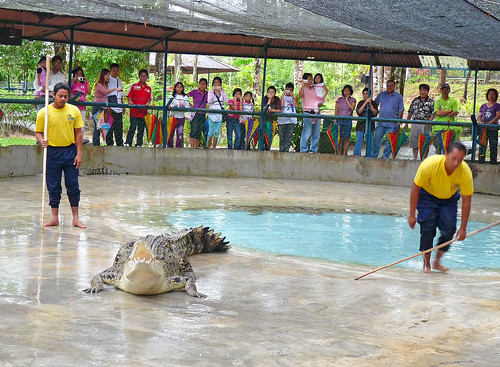 Langkawi Crocodile farm3