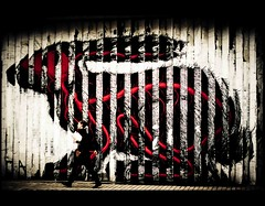 (Fritenks) Tags: streetart rabbit london art 3d stencil roa shortlist romanywg