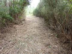 Sentier du ruisseau de Sainte-Lucie : début du sentier démaquisé en 02/2010