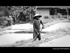 WORKING ON A RAINING DAY.... (M.GÁLLEGO) Tags: street city travel vacation portrait people blackandwhite bw bali holiday man tree blanco water hat rain canon indonesia negro social 70200f28 50d