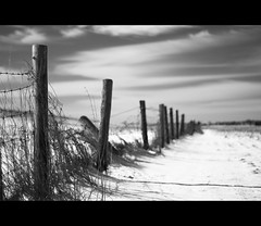 Unsaturated perspective (Danil) Tags: winter snow holland netherlands 50mm march europe daniel tag sneeuw nederland depthoffield poles groningen nikkor f18 dijk weiland duitsland 2010 oost d300 oudedijk stadspolder abigfave nieuwestatenzijl anawesomeshot grensgebied drieborg akkerland kroonpolderweg blackandwhitelandscapestuff