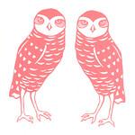"Burrowing Owl Couple by Sarah Landwehr <a style=""margin-left:10px; font-size:0.8em;"" href=""http://www.flickr.com/photos/7331163@N05/4435875856/"" target=""_blank"">@flickr</a>"