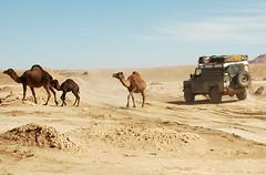 Road Block (mpudi97) Tags: travel desert camel morocco maroc landrover camels marokko piste kamele mpudi97