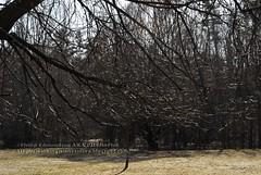 Sunnybrook Dog Park