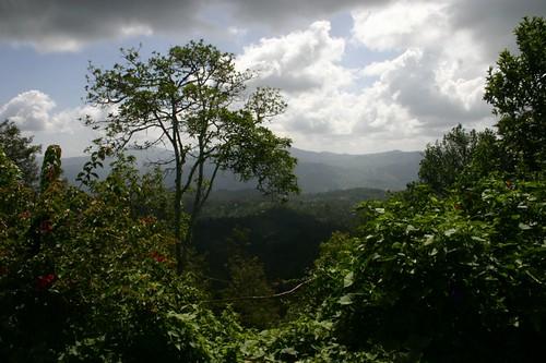 Wongonyi views