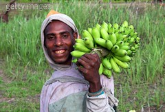 98055882 (Mangiwau) Tags: man green photography michael flickr artist images banana collection bananas bunch getty hood papua picks hijau fotografi hooded pisang sarmi papuan thirnbeck mangiwau beneraf memorycornerportraits