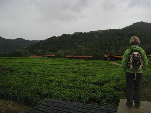 Amanda takes in a view of the villas, and the misty Nyungwe Forest