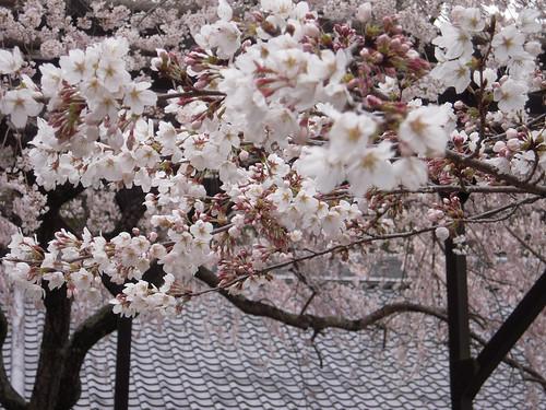 長谷寺 - Hase-dera // 2010.03.31 - 31