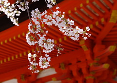 Miyajima Five-Storied Pagoda  Cherry BlossomsWorldheritage (h orihashi) Tags: beautiful japan cherry landscape shrine niceshot searchthebest pentax miyajima   soe breathtaking worldheritage nationalgeographic itsukushima musictomyeyes aphoto aclass  k7 naturesfinest  blueribbonwinner coth  supershot naturesgarden bej fineartphotos golddragon abigfave royalgroup diamondheart platinumphoto anawesomeshot colorphotoaward impressedbeauty flickrhearts ultimateshot flickraward crystalaward infinestyle diamondclassphotographer flickrdiamond flickrbronzeaward citrit excellentphotographerawards heartawards theunforgettablepictures diamondstars colourartaward justpentax everydayissunday theperfectphotographer goldstaraward flickrestrellas cherryontopphotography peaceawards hatsukaichishi rubyphotographer ddsnet damniwishidtakenthat colorphotoawardpremier dragondaggeraward newenvyofflickr pentaxart pentaxk7 sapphireawards