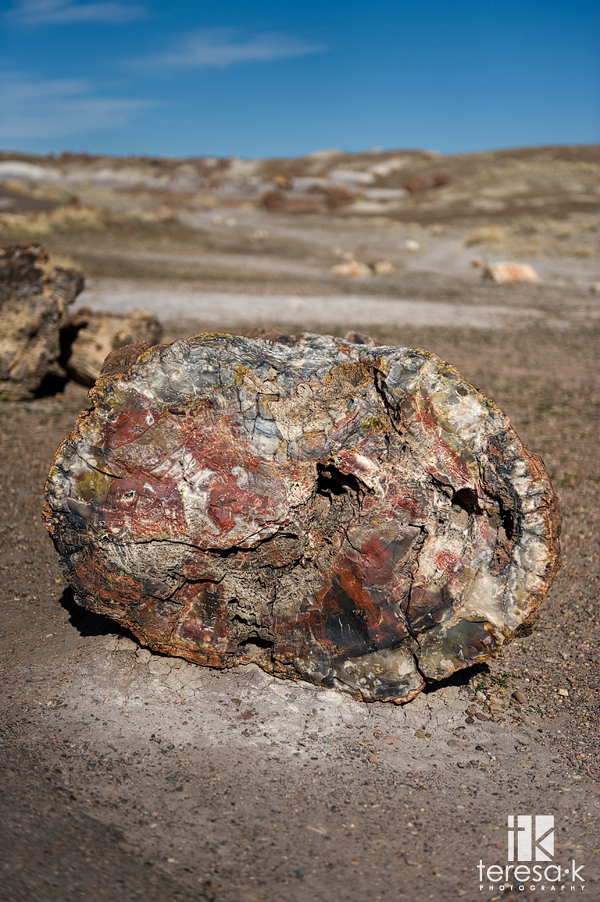 Petrified Wood, Petrified Forrest, Painted Desert, National Park, Teresa K photography