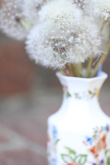 (theloushe) Tags: flowers brick botanical hope weed steps dream blow fluff dandelion seeds believe vase dreamy wish makeawish cherish pappus