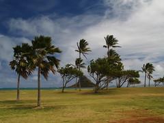 P4021220 (ymeng00) Tags: beach hawaii oahu kualoaregionalpark