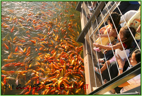 Fish Feeding and Boating in Nuvali-12