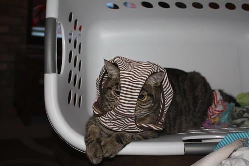 Laundry Basket Mischief