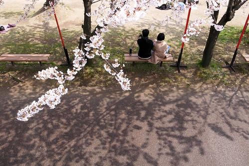 sakura sunday