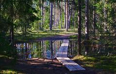 Matkarada. (Jaan Keinaste) Tags: trees reflection water forest spring estonia pentax mets vesi puud eesti kevad k7 viruraba peegeldus vanagram