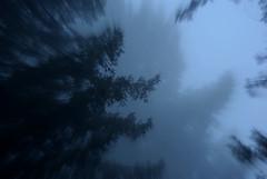 Mysterious Fog (Schelvism) Tags: california blue trees winter cloud blur cold fog zoom redwoods pentaxk200d
