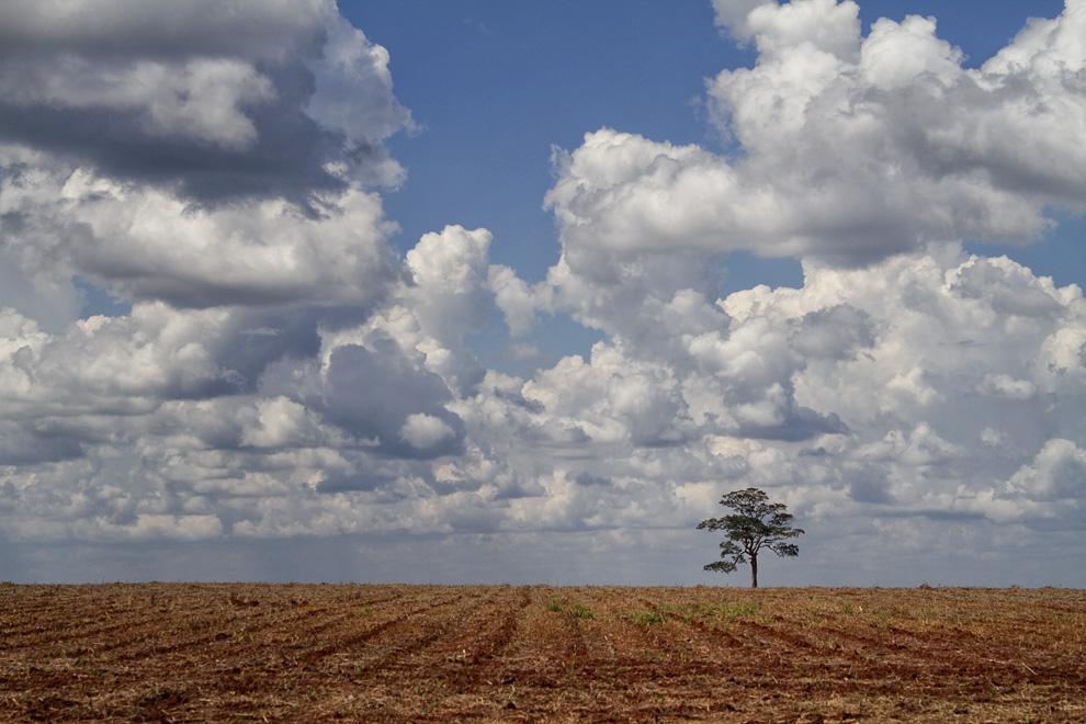 Grandes extensiones de tierra esperan nuevas semillas a la vera del camino en la Colonia Menonita de Río Verde. (Rio Verde, San Pedro, Paraguay - Tetsu Espósito)