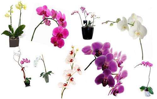 orkideakollaasi