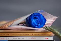 Sant Jordi, detall dels llibres i la rosa (sergi meseguer) Tags: roses flower rose book flor abril rosa libro rosas 2010 santjordi stjordi llibre