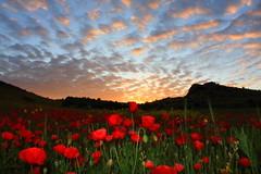 atardecer de amapolas (Miguel A.Ureña) Tags: sol miguel canon d murcia cielo nubes 40 margaritas amapolas mazarron ureña a
